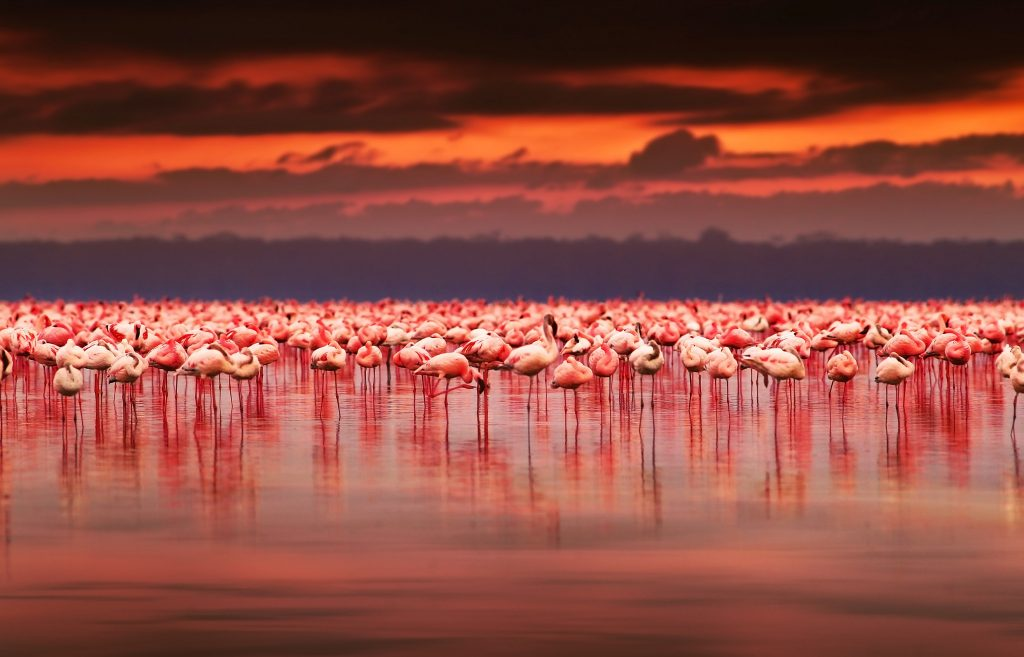 flamingo troupe - African Tours