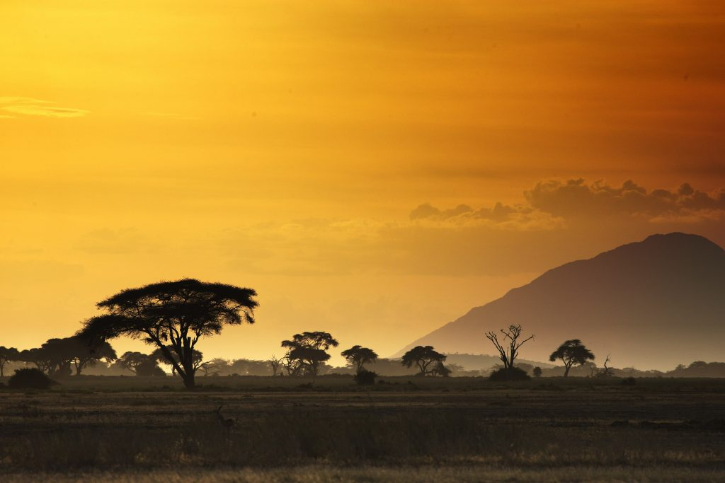 Africa at sunset with animals